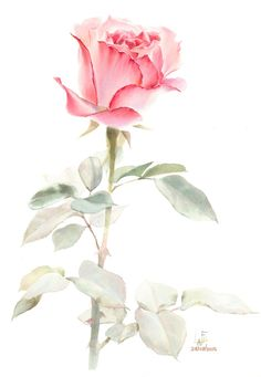 Watercolor without drawing by LaFe Watercolor Artists, Watercolor Rose, Watercolor Artwork, Flower Art Images, Arte Floral, Botanical Art, Drawings, Illustration, Rose Paintings