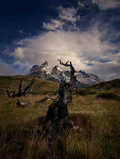 Raised to the sky - Raised to the sky. Torres del Paine National Park, Chile.