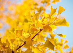 yellow things by angeloangelo, via Flickr