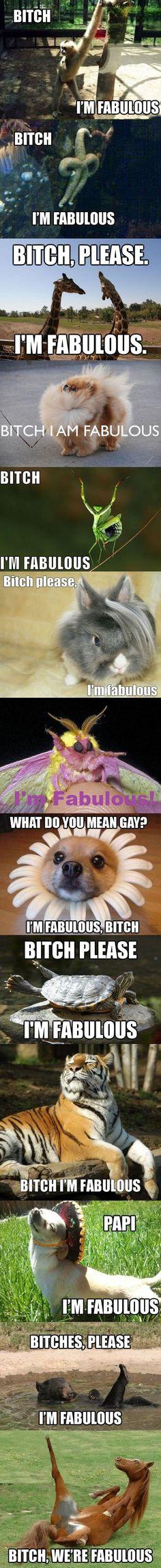 Fabulous animals are FABULOUS