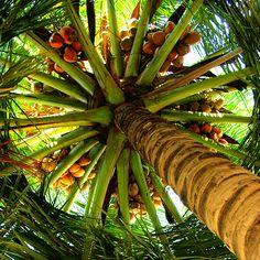 Coconuts....