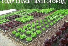 Raised Vegetable Garden Beds Can Be A Great Gardening Option – Handy Garden Wizard Home Grown Vegetables, Fall Vegetables, Planting Vegetables, Organic Vegetables, Growing Vegetables, Planting Seeds, Growing Herbs, Veg Garden, Garden Plants