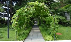 39 Best DIY Garden Trellis Ideas To Consider[Listicles] Pea Trellis, Clematis Trellis, Arch Trellis, Garden Trellis, Trellis Ideas, Cattle Panel Trellis, Cattle Panels, Planter Boxes, Planters