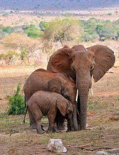 Loving elephant!http://perthhomecleaners.com.au/carpet-cleaning0420 270 260