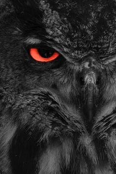 My eye on you ..