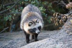 山口の里山ってどんな生き物が住んでいるか知っていますか里山には多くの生き物が生息しています 山口県立山口博物館による里山の動物観察会では里山のアナグマの巣穴をのぞきその生態について知ることができるそうです 普段キツネやタヌキが生活する巣穴の周辺を観察してその生態の実態について学んでいくという趣旨のものでアナグマたちの身近にいるものの今まで知らなった新たな一面が明らかになるかもしれません 動物が好きな方には特に楽しめそうなイベントですよ  tags[山口県]