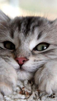 wonna cuddle? #cutecats #cats #animals
