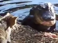 The scariest animal in the planet 😜 . Scary Animals, Nature Animals, Cute Funny Animals, Animals And Pets, Cute Cats, Animal Antics, Animal Facts, Funny Animal Pictures, Best Funny Pictures