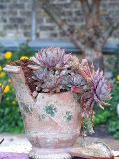 Broken pot with succulents by Tracy Rowan, via Flickr Hens and Chicks, I believe. From Urhausen. 6/12