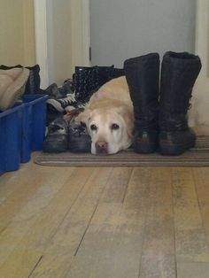 My dog is soooooo cute. Her name is Zoe grad of the boots Dog, Boots, Awesome, Cute, Animals, Animais, Animales, Animaux, Dogs