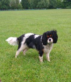 Dog Walker Tooting, Balham & Clapham