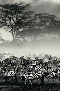 Amazing! Obviously you love zebras, so come check out my Pink Zebra website. Unique, high quality, inexpensive home fragrance that is as unique as a zebra's stripes!