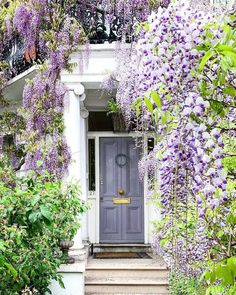 , Wisteria london _ glyzinien london _ glycine londres _ glicina de londres _ wisteria wedding, wisteri There are plenty of things which might as a final point entire a person's garden, such as an oldtime white. Wisteria Trellis, Wisteria Garden, Wisteria Wedding, Wisteria Tree, Wisteria Pergola, White Wisteria, Wisteria Tunnel, Gazebo, Beautiful Gardens