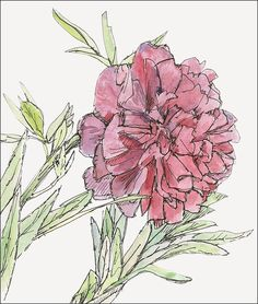 Romantic red and pink peony, flower home decor signed fine art print 8.5x11 Valentine Day Gift. $18.00, via Etsy.