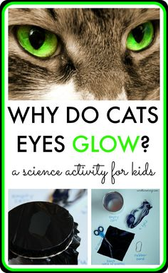 Why Do Cats Eyes Glow?? Find out why with this science activity for older kids!