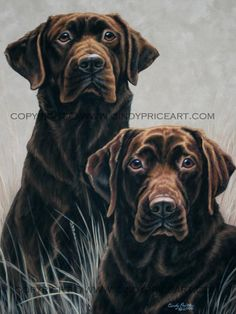Chocolate Labs Print of original pastel painting by cindypriceart, $27.99