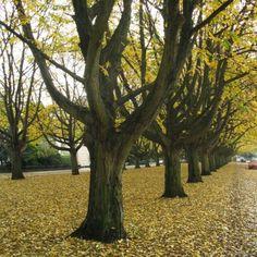 Bomenrij