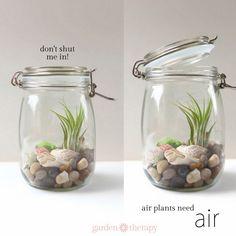 dont-shut-me-in-Air-plants-need-air.+%281%29.jpg (700×700)