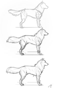 drawing animals step by step realistic - Google Search #DogDrawing