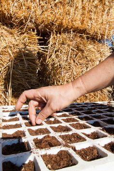 Construcción de un semillero
