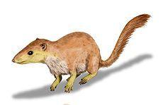 18.Hace 64 millones de años atras, somos un purgatorius (mamífero). Estos se convierten en los animales dominantes de la tierra. La nueva vida comienza a brotar de la ceniza de la destrucción.  Empieza a salir fruta y tenemos más nutrientes.