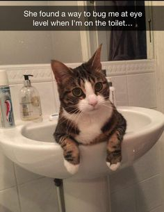 Love Cute Animals shares pics of playful animals, cute baby animals, dogs that stay cute, cute cats and kittens and funny animal images. Funny Animal Memes, Cute Funny Animals, Funny Animal Pictures, Cat Memes, Funny Cute, Cute Cats, Funny Pics, Funny Memes, Videos Funny