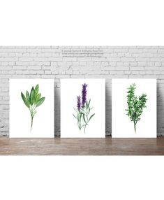 Herbs set of 3, Abstract Minimalist Painting, Food Art Kitchen Wall Print, Sage Art, Lavender Watercolor, Thyme Picture, Herbs Spices Chart