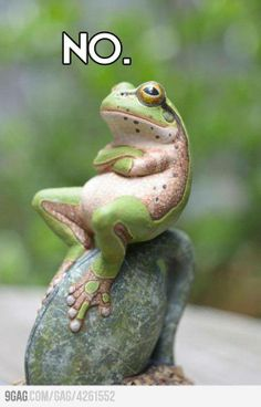 this frog is everything ever amazing ever.