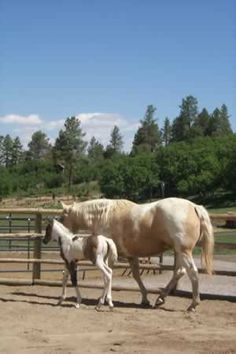 Homoeopathy for Mares and Foals