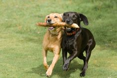 HOW TO Treat Common Dog Park Injuries. Read up before high-tailing it to the dog park this summer :]
