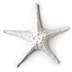 The sea floor comes to life in your home with this starfish figurine that includes a slot on the back for wall hanging. Starfish Wall Decor, Burial Urns, Lighted Glass Blocks, Wall Plaques, Metal Wall Art, 3 D, Statue, Resin, Sea Floor