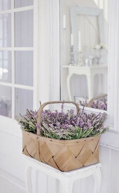 Pots of lavendar or Mexican Heather in basket. another simple market basket as inspiration ~ simple and pretty summer floral arrangement Lavender Cottage, French Lavender, Lavender Blue, Lavender Fields, Lavender Flowers, Beautiful Flowers, Lavander, Lavender Scent, Beautiful Things