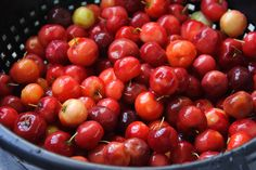 Make West Indian Cherry Puree. This is a demonstration of making West Indian Cherry Puree. Learn how to make Caribbean Cherry Fruit Puree. Good Healthy Snacks, Healthy Dishes, Healthy Tips, Guyanese Recipes, Cherry Fruit, Post Workout Snacks, Fruit Puree, Island Food, West Indian