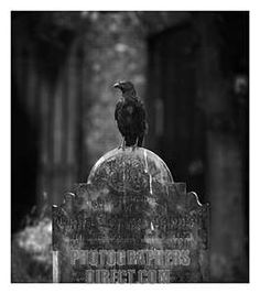 Crow on a tombstone , Highgate Cemetery … Cemetery Angels, Cemetery Art, Highgate Cemetery London, The Spectre, Quoth The Raven, The Magnificent Seven, Haunted House Props, Danse Macabre, Memento Mori