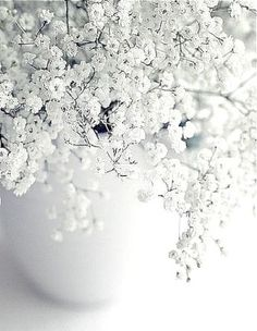 Baby's breath in a vase is beautiful, simple and sweet. Baby's breath in a vase is beautiful, simple and sweet. Deco Floral, Arte Floral, Aesthetic Colors, White Aesthetic, White Flowers, Beautiful Flowers, Diy Flowers, Spring Flowers, Pure White