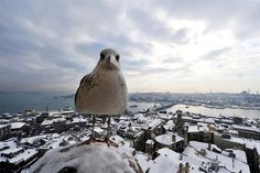A seagull stands on Galata Tower on Jan. 9. Heavy snowfall blanketed Turkey's commercial hub Istanbul, a city of 15 millions, paralyzing daily life, disrupting air traffic and land transport.    (Photo: Bulent Kilic / AFP - Getty Images)