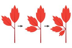 creating all kinds of leaves & berries in Illustrator