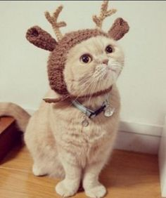 1000 images about cat outfits on pinterest cat costumes