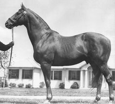 Man o' War: The most famous horse that never ran in the Kentucky Derby