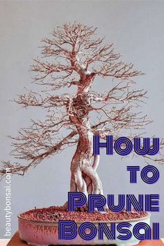 Creating a bonsai is truly about building a design structure that is cohesive from the trunkline to the finest branching