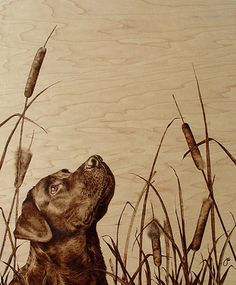 a black labrador dog poses in this photorealistic wood burning art work by julie bender « « mayhem  muse