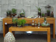 Terrariums from Expoflora Holambra 2013
