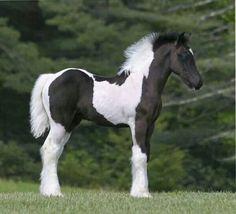 baby horses | Pretty baby!#horses | Horses