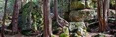Bruce Trail - Halton Hills