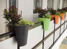 Tips dan Cara menanam tanaman hias/bunga di dalam pot