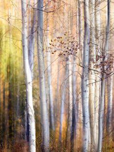 Photographic Print: Come Walk with Me Art Print by Ursula Abresch : Framed Artwork, Framed Prints, Wall Art, Beach Landscape, Watercolor Landscape, Tree Art, Botanical Art, Scenery, Illustration
