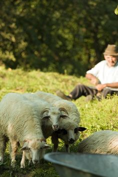 """Sheep and shepherd in the village of Ieud. Just across from the wooden church, a very nice lady welcomed us with delicious local """"mamaliga"""", melted cheese and smoked meat Smoking Meat, Melted Cheese, Eastern Europe, Sheep, Peace, Lady, Room"""