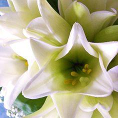 Pentru o fiinta deosebita! La multi ani! http://ofelicitare.ro/felicitari-de-la-multi-ani/pentru-o-fiinta-deosebita-134.html