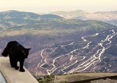 Cat from Mount Washington Observatory in North Conway, USA ,,, Since its founding in 1932, there has always been at least one cat living with the crew. They kept mice at bay, and also made the quarters feel more like home.