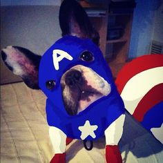 "20 Likes, 7 Comments - antonio capillo (@mashi81) on Instagram: ""#avengers #dogstagram #petstagram #frenchbulldog #frenchiegram #frenchies #ilovemydog"""